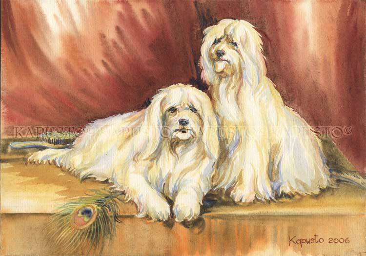 Pavel Kapusto : Maltese terriers watercolor , 8x12 ins.