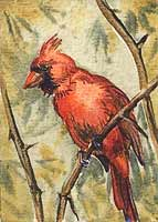 ACEO : Common Cardinal watercolor , 2,5x3,5 ins.