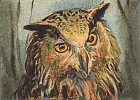 ACEO : Owl watercolor , 2,5x3,5 ins.